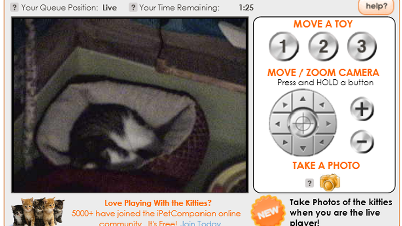 This Is Not a Dream: Remotely Operate Toys For Adoptable Kittens to Play With