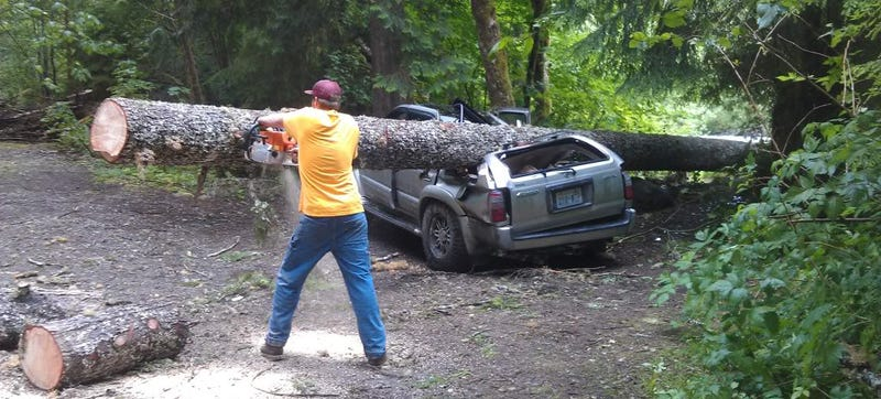 Tree Falls On 4Runner, 4Runner Refuses To Die