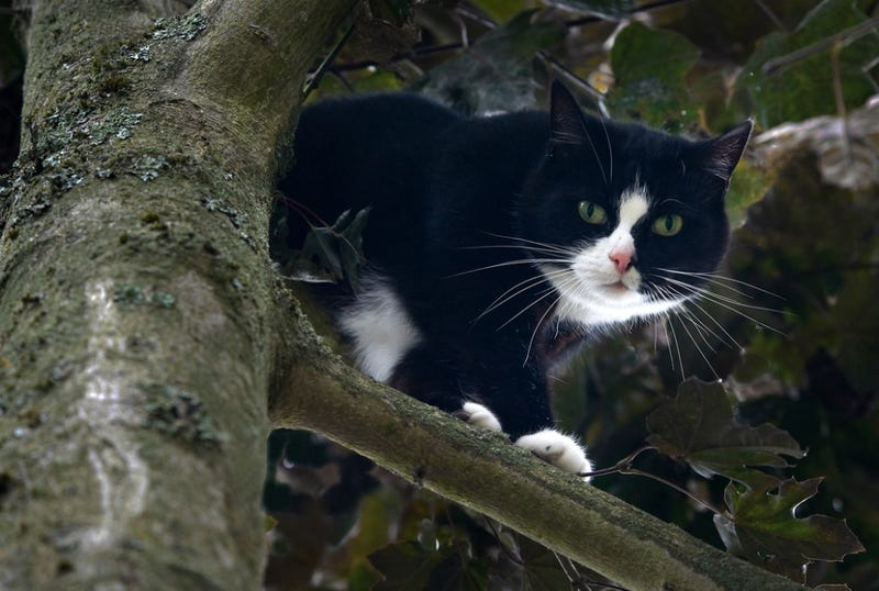 Firefighters Rescue Cop Stuck In Tree Who Was Trying to Save Cat