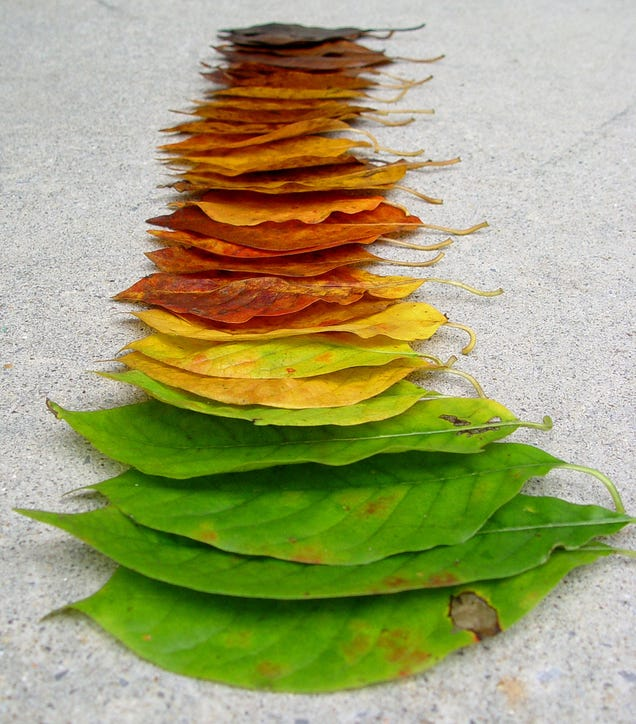 What Makes Leaves Change Color In The Fall