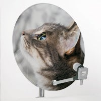 Kitty Cat Satellite Dish Sticker: A Haiku