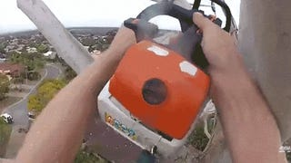 Chopping down a super tall tree with a chainsaw looks like a lot of fun