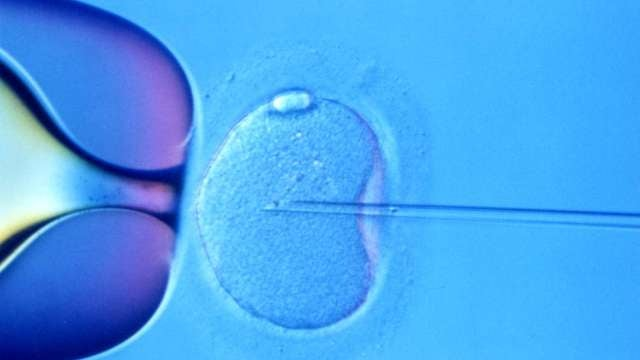 The first three-parent babies could soon be born