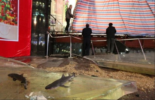 Huge Shark Tank Breaks Inside Chinese Mall, 15 People Injured (Updated)