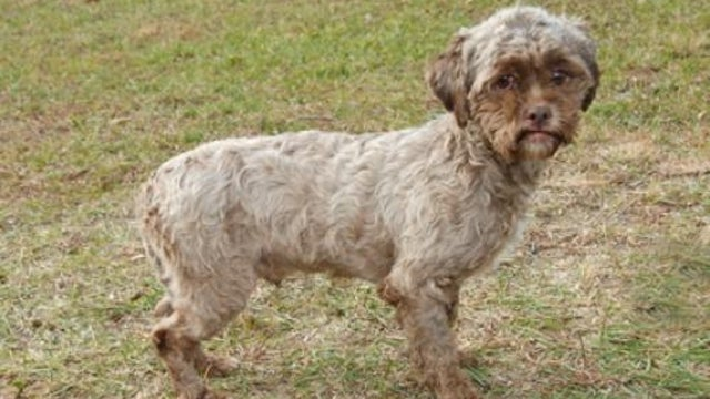 Dog With 'Human Face' Looking for Human Dog-Lovers to Take Him Home
