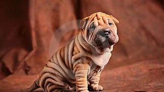 In case you wanted to know what kind of dog the Michelin Man owns: