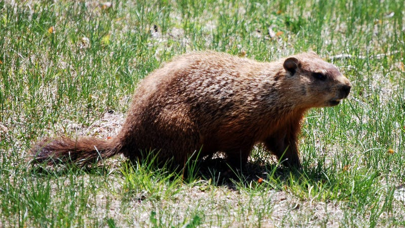 Five Winter Predictors That Are Even Dumber Than a Groundhog
