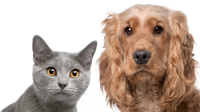 Science Shows that Dogs Are Sycophants and Cats Are Con Artists