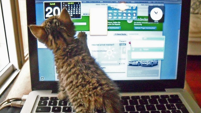 The Kitten Wants a Touchscreen in This Week's Open Thread