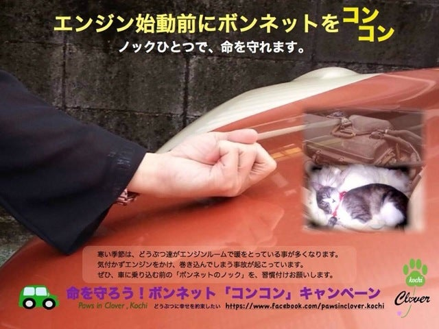 Knock on Your Car. You Might Save a Cat.