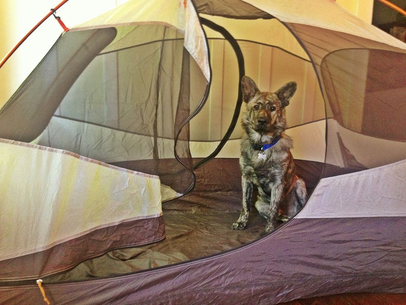 ​How To Take Your Dog Camping