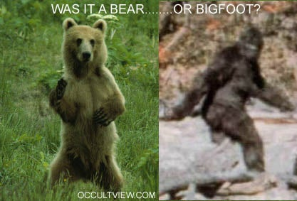 Bigfoot is one step (see what I did there?) closer to non-existence
