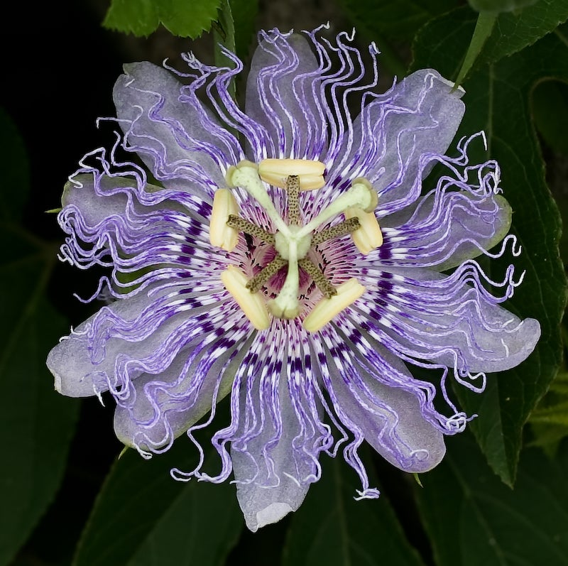 Why Did Plants Evolve These Weird and Horrific Flowers?