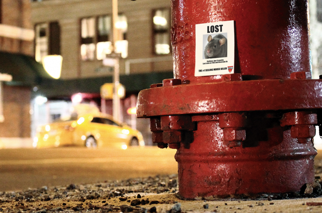 Missing mice posters are being pasted all over New York