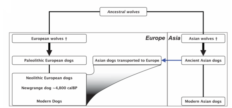 Looks Like We Were Wrong About the Origins of Dogs