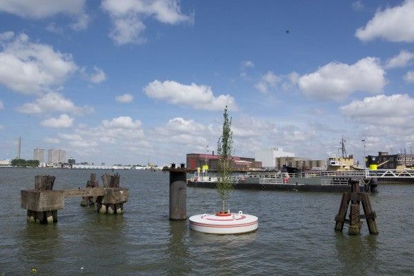 A Floating Forest Will Add Instant Greenery to Rotterdam's Harbor