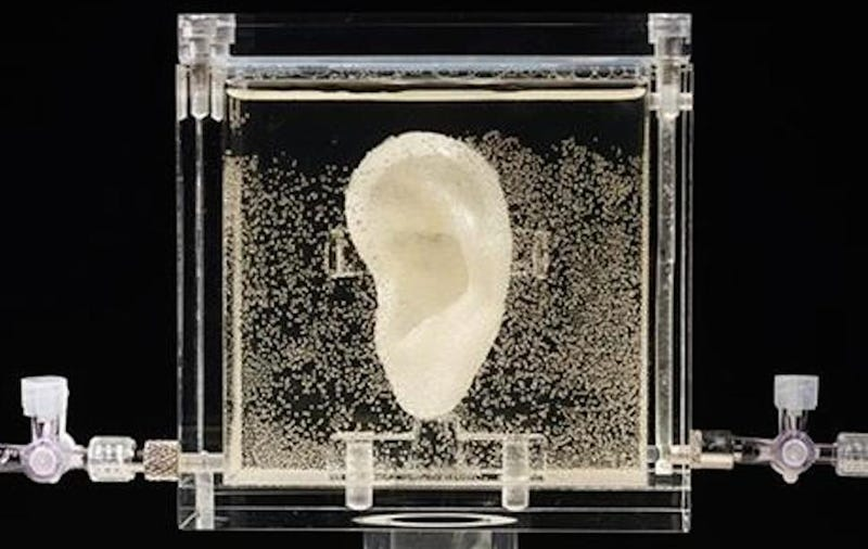 German Museum Lets You Talk to van Gogh's Regrown Ear