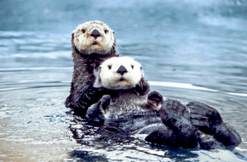 Help find the dirtbag who shot and killed three sea otters