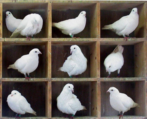 Why the Pigeonhole Principle Is One of Math's Most Powerful Ideas