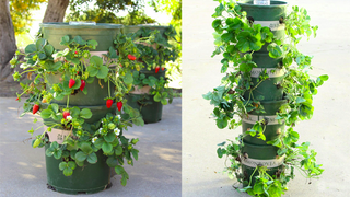 Make a Strawberry Tower with Built-in Water Reservoir