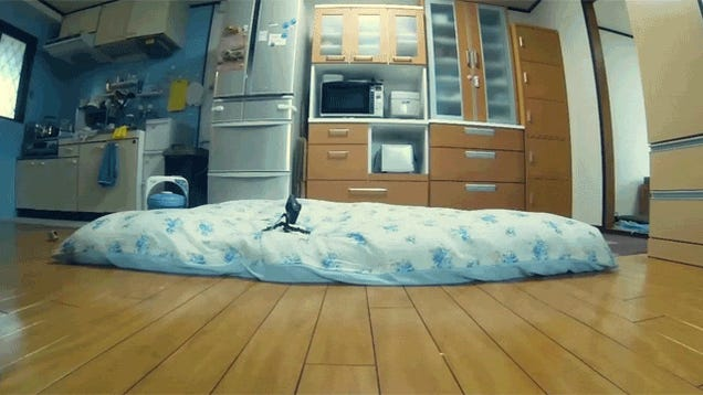 Japan's Jumping Cat Leaps Like You Wouldn't Believe
