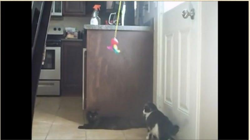Solar Powered Cat Toys Are Cat Nip to Crazy Cat Ladies