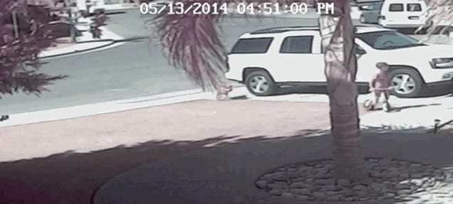 Cat Rescues Child From Dog Attack In Driveway, Makes Best GIF Ever