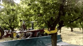 The Quickest Way To Pick Cherries Is With a Giant Vibrator