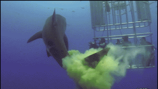 Here's a Shark Pooping On People!