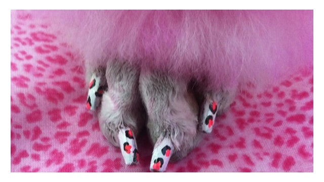 Now You Can Safely Paint Your Dog's Nails