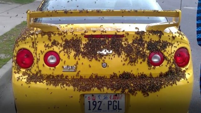 This Is A Chevy Covered In Bees!