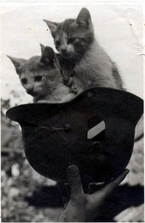 The Heartless Kittens of the Third Reich