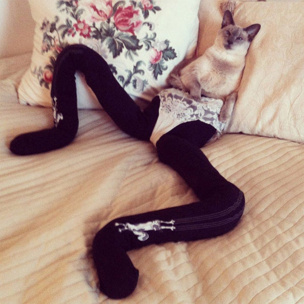 Internet Implodes at the Sight of Cats Wearing Tights