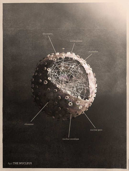 Dramatic diagrams of cell biology and atomic structure belong in a beautiful textbook