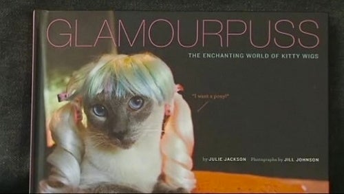 Video: Woman Abandons Career To Photograph Cats In Wigs