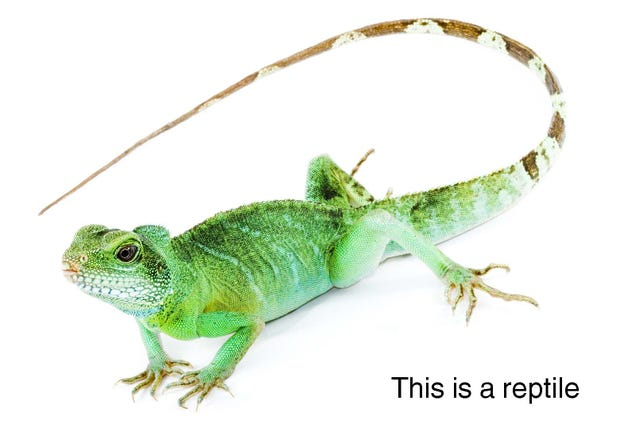 Yes, there is such a thing as reptiles