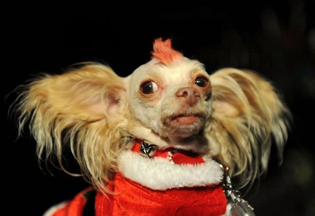 Dog Custody Gets Ugly