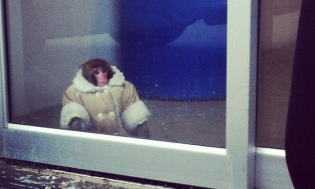 Where Are They Now: the Ikea Monkey