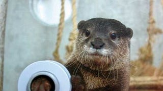 Do you like otters? Are you in Japan?