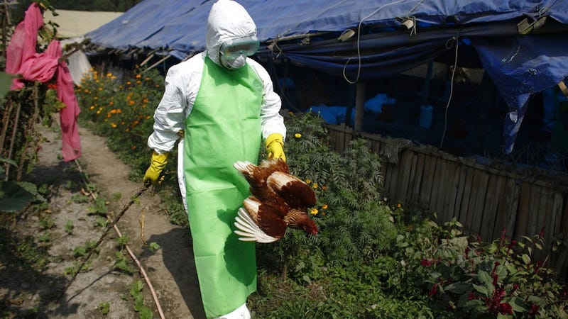 New Strain of Bird Flu Breaks Out in China, Killing at Least 2