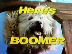 "Furry Tries To Legally Change His Name To ""Boomer The Dog"""