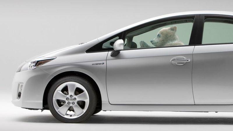 Angry, smug bear takes Prius for a joyride