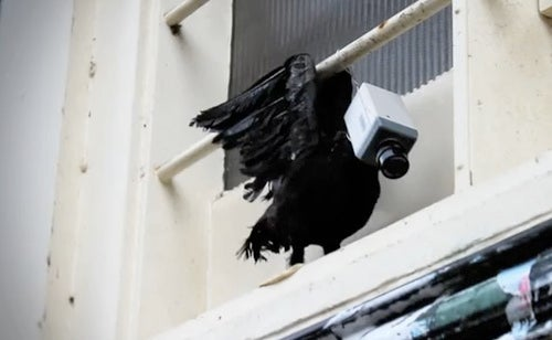 In the streets of Utrecht, cybernetic birds keep tabs on the populace