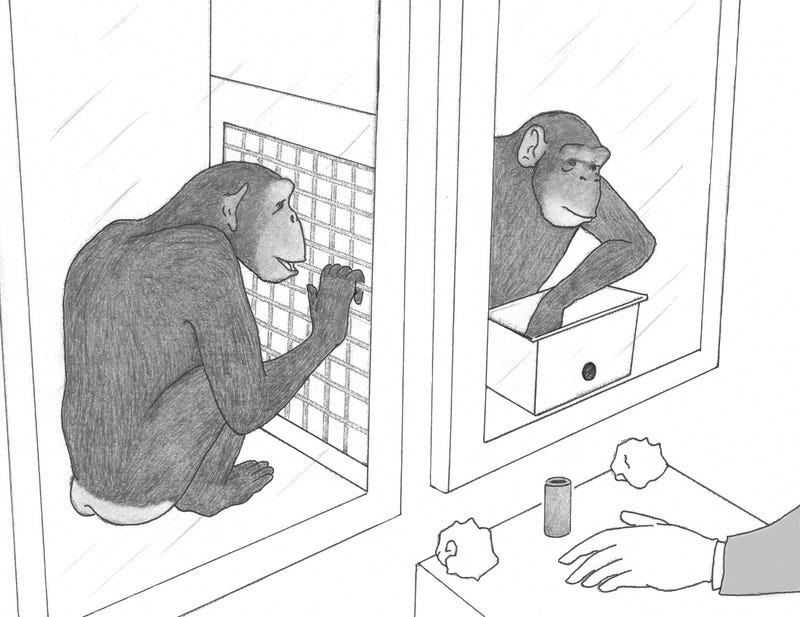 Chimps prove that human generosity is an ancient trait