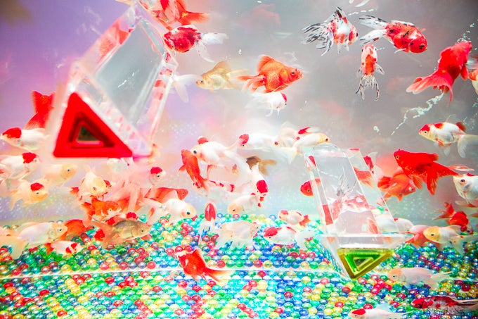 This Is Not Aquarium Porn. It's Art.