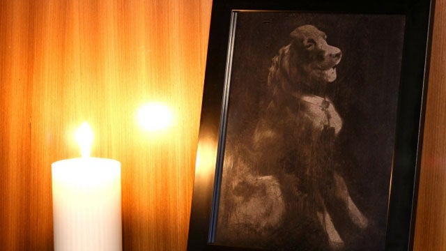 This Dog Photo Is Made With Her Own Ashes