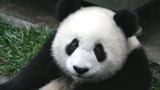 PANDAS ARE FULL OF LIES