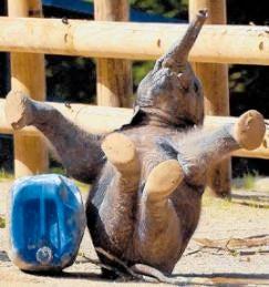 10 Ways Animals Get High