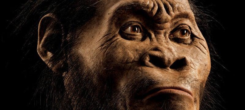 Hallan un posible antepasado inédito de los seres humanos: el Homo naledi