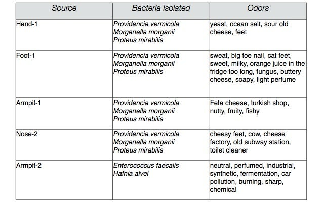 What does cheese made from armpit and nose bacteria smell like?